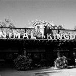 The 6 Best Places to Eat at Disney World's Animal Kingdom
