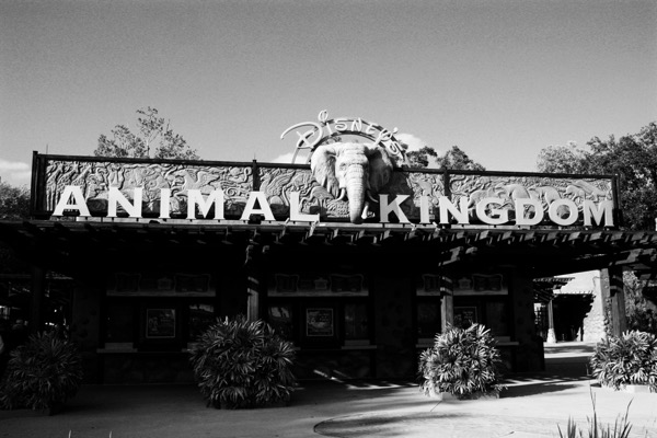 The Animal Kingdom at Disney World