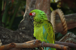 A Macaw relaxing at the Animal Kingdom