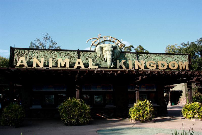 Welcome to the Animal Kingdom