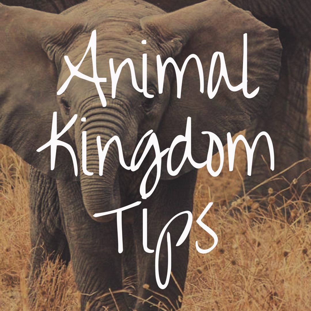 Disney World Tips and Tricks for Animal Kingdom