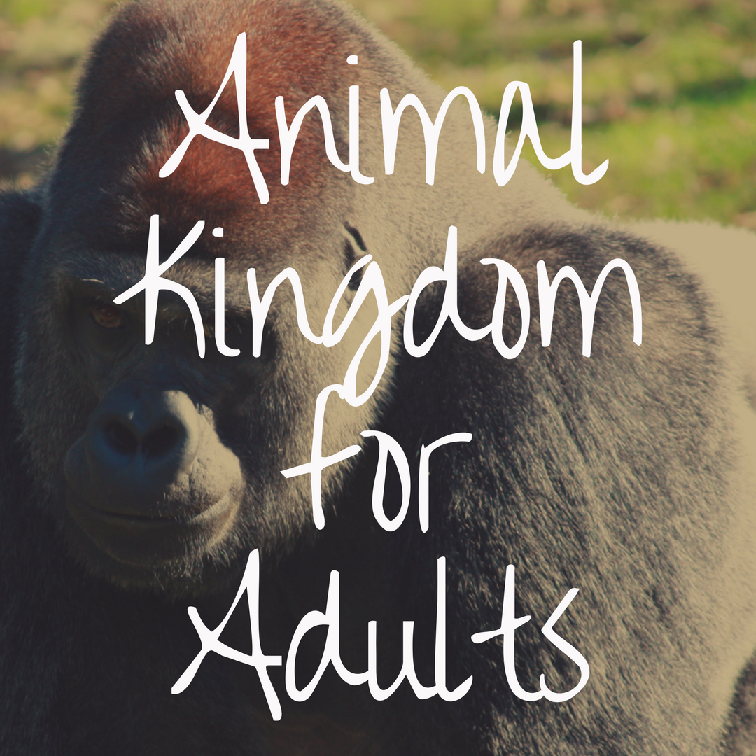 Why Animal Kingdom is the Best Disney Park for Adults