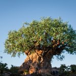 The 10 Most Popular FastPasses at Animal Kingdom